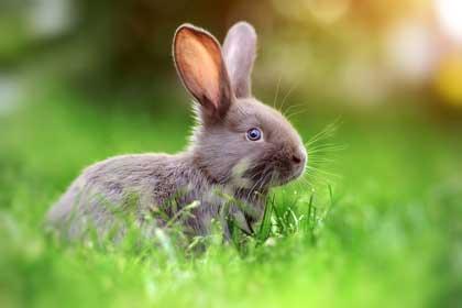vorbereitungen bevor das kaninchen einzieht contao